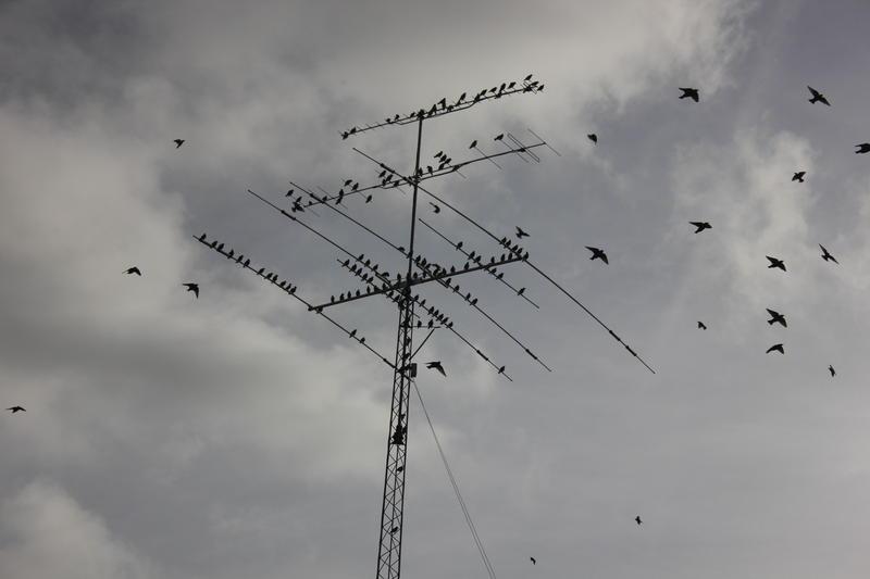 Fugl i Myren