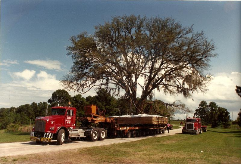Moving a tree for Disney in Florida