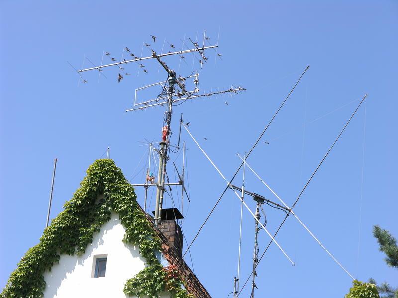 Schwalben auf den Antennen