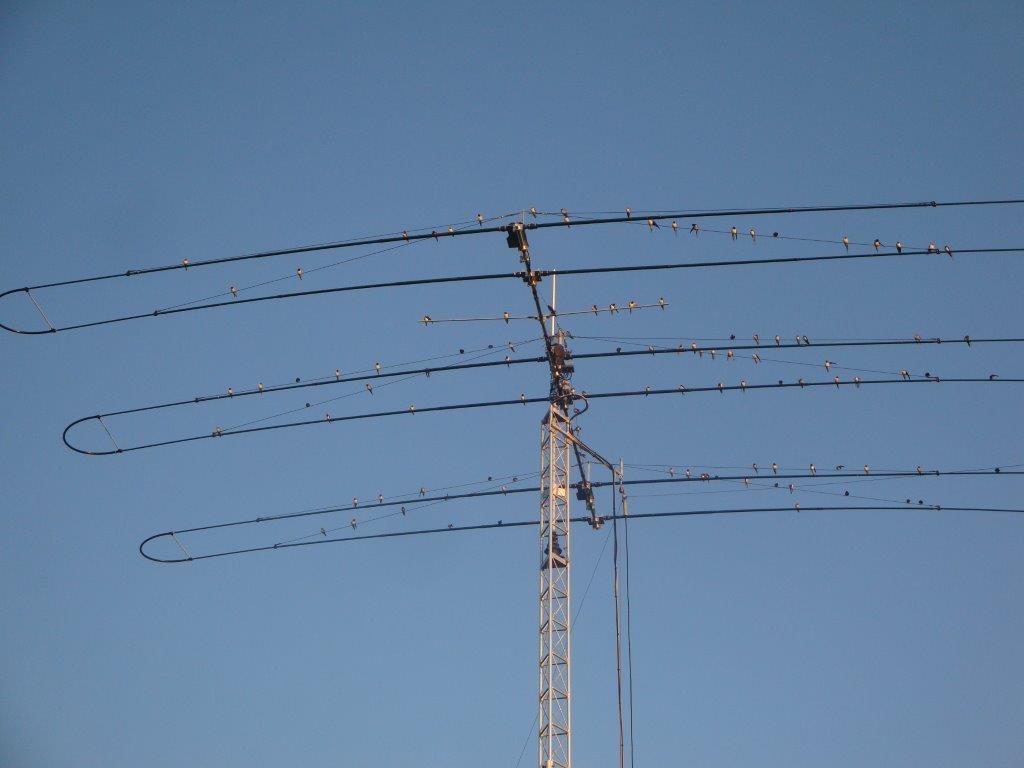 bird's like this antenna too