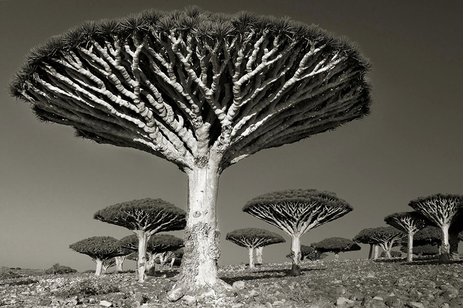 Photographer documents world's oldest trees