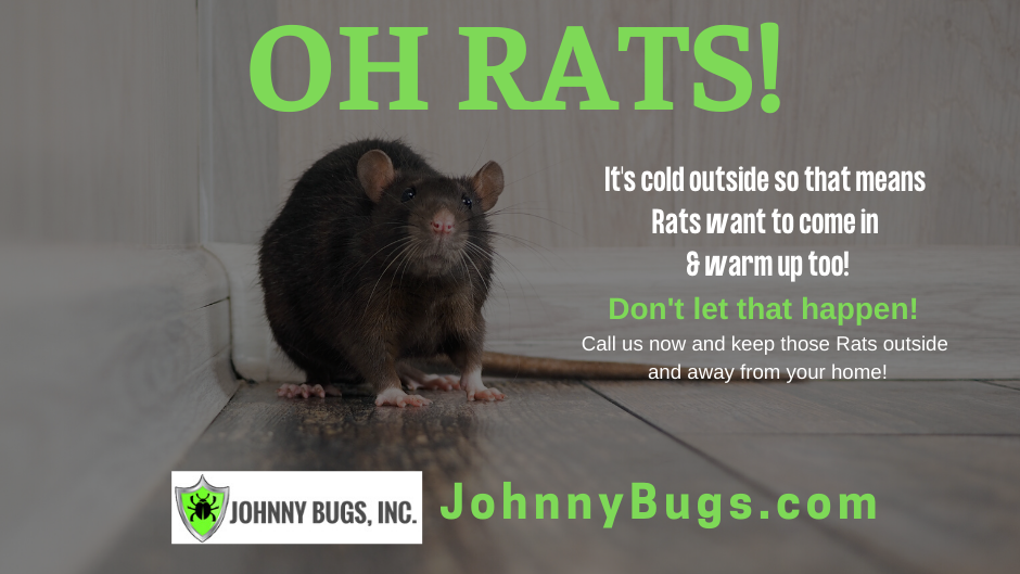 johnny_bugs_rats.png