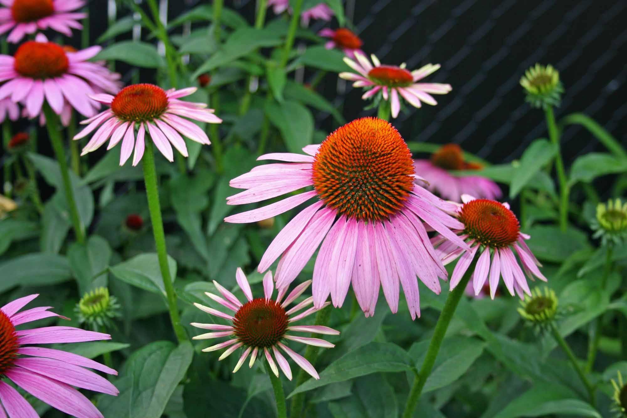 native plant.jpg