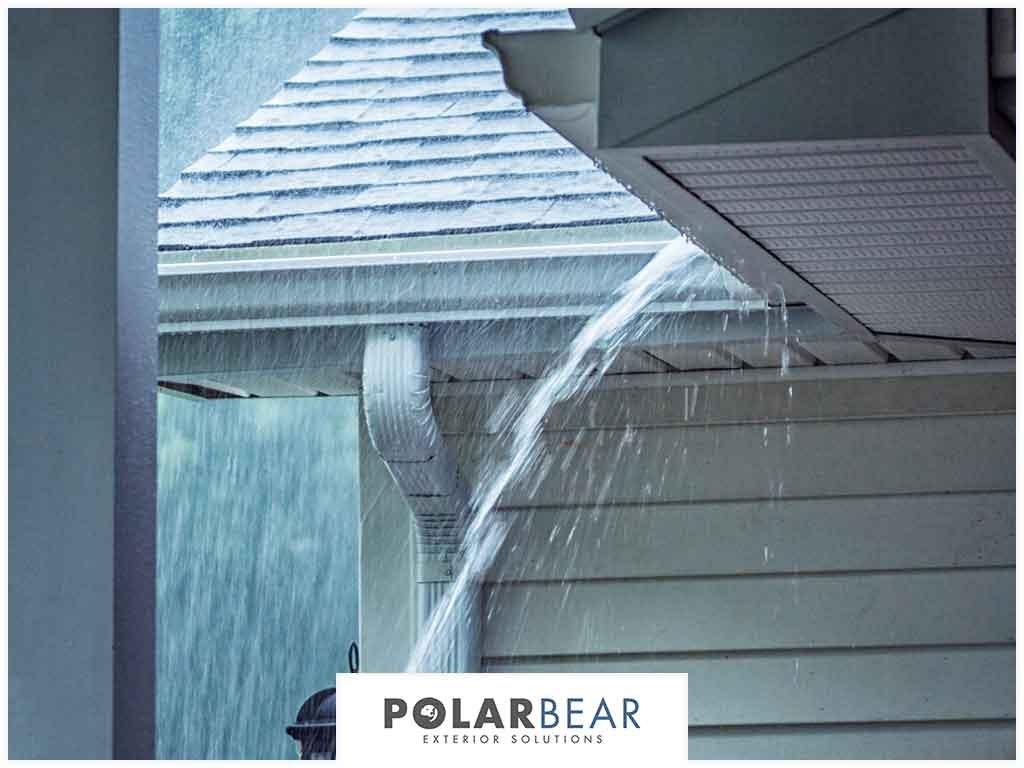 31-polarbearnw2.jpg