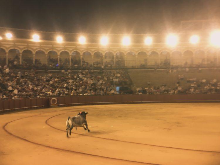 Bullfighting Img 0128