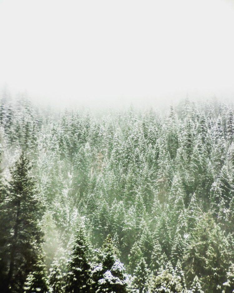 Tahoe 4A