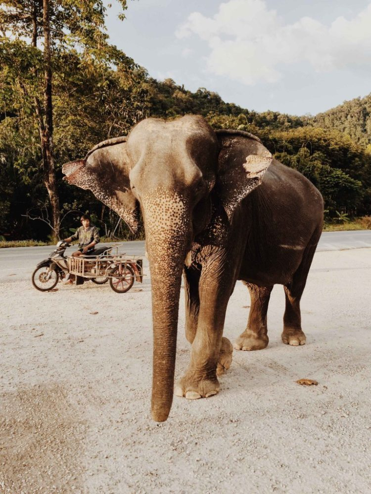 Thailand 17A