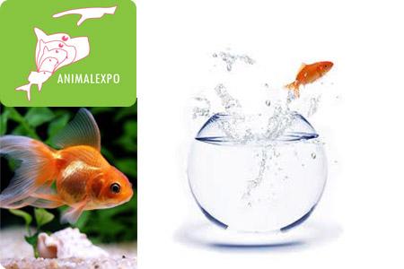 Faites plaisir vos enfants avec ces joyeux compagnons 2 for Aquarium poisson rouge bocal