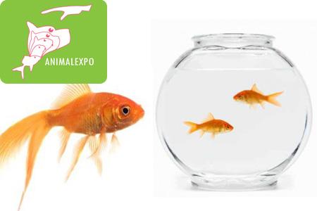 Faites plaisir vos enfants avec ces joyeux compagnons 2 for Alimentation des poissons rouges
