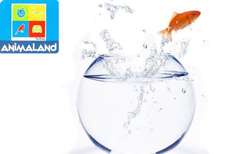 Vos enfants ne vont pas s 39 ennuyer avec ce poisson rouge for Acheter poisson rouge casablanca