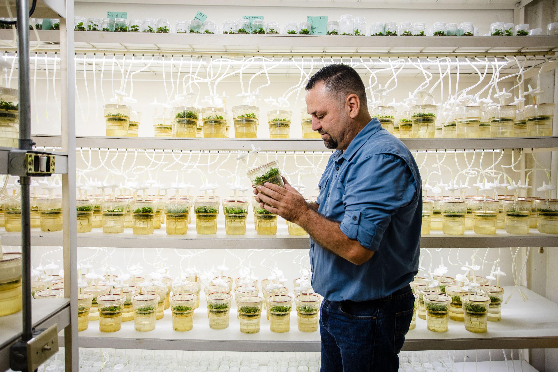 William Solano está desarrollando nuevas variedades híbridas de café que podrían funcionar mejor en un clima cambiante.