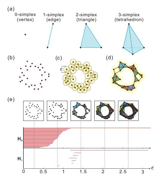 La topología revela la estructura subyacente de conjuntos de datos complejos.
