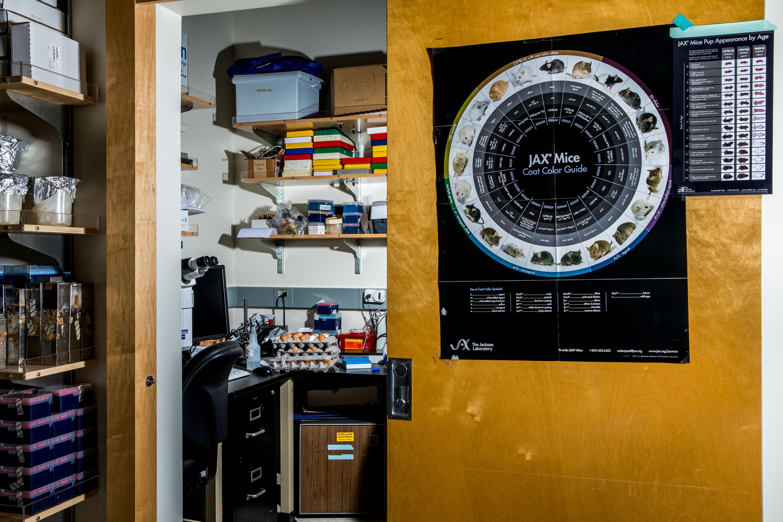 Laboratorio de Izpisúa Belmonte en el Instituto Salk.