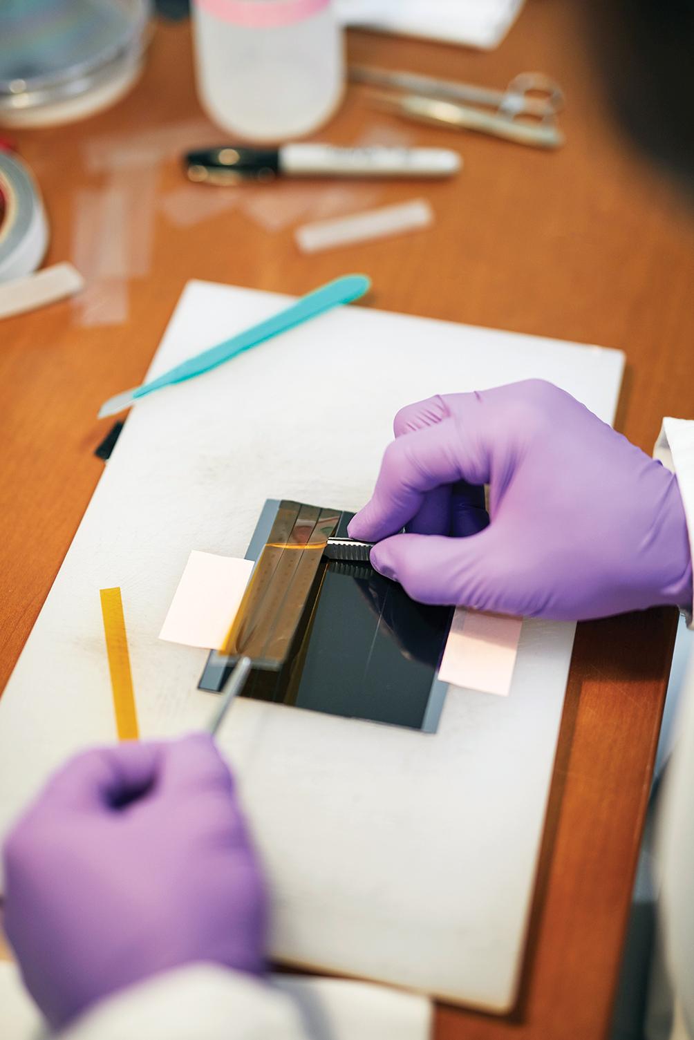La cinta, con las muestras del cerebro unidas, se recorta y se pone en una placa de diapositivas que entrará en una máquina de exploración enorme.