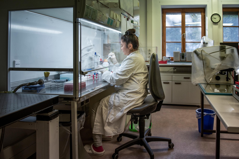 El investigador científico Kurome Mayuko se prepara para trabajar con embriones de cerdo, presentando ediciones genéticas que con suerte harán que sus órganos trasplantados sean más aceptados por los humanos.