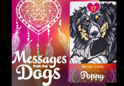 Ad for Messages from the Dogs Oracle Deck