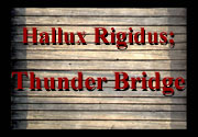 Ad for Hallux Rigidus; Thunder Bridge