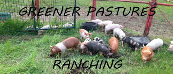 Greener Pastures Ranching (Deluxe) Logo