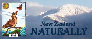 NZ Naturally Tarot  Logo