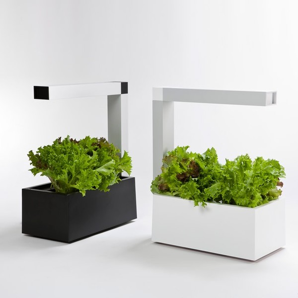 Herbie indoor cultivation system for aromatic plants lapadd for Plante aromatique