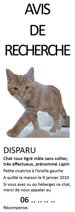 recherche de chat