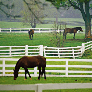 Asheville NC Equestrian Communities
