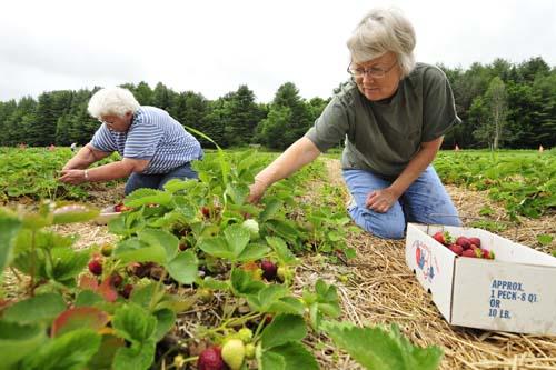 Calais Vermont Farming