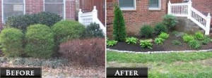 before and after planting