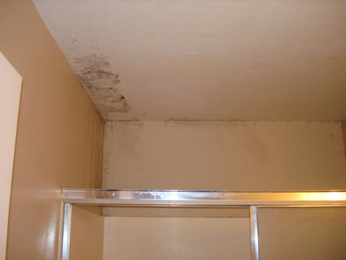 Ceiling Mold Photo