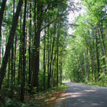 Scenic Road Leading To Your Source For Maine Real Estate Expertise at RE/MAX Presidential