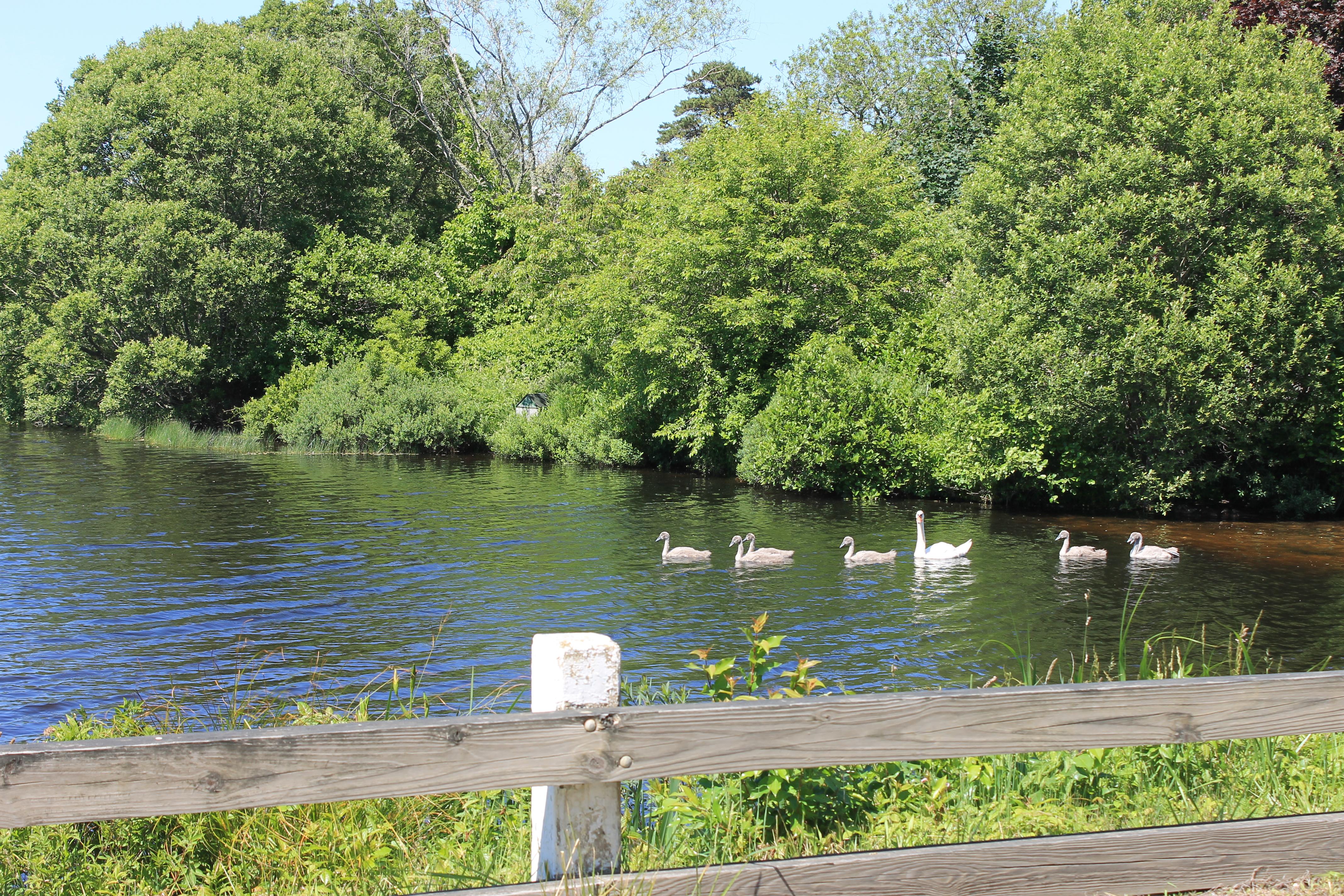 West Tisbury Parks