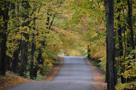Tamarak Road, Stowe, Vermont. Jeff Beattie photo taken 10/4/12