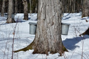 Sap Buckets Jeff Beattie photo taken at Trapp Family Lodge on 3/9/13