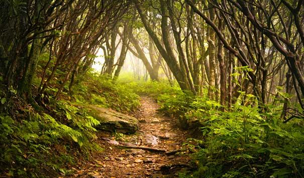 Asheville NC Trails