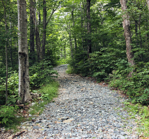 southern Vermont hiking trail