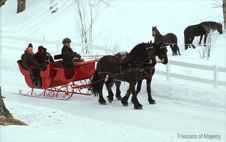 Sleigh Rides in Vermont, Freisians of Majesty horse-drawn sleighs