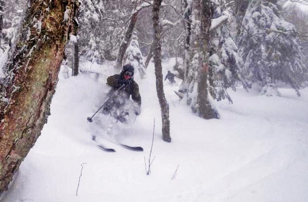 Skiing in glades
