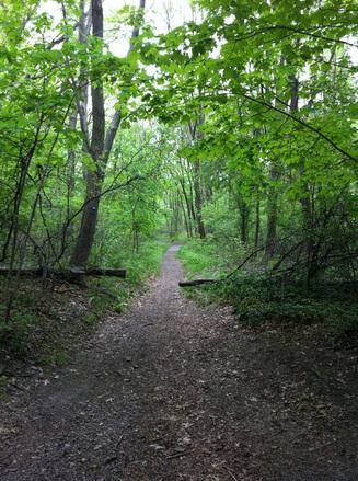 Cutler Park Reservation Trail