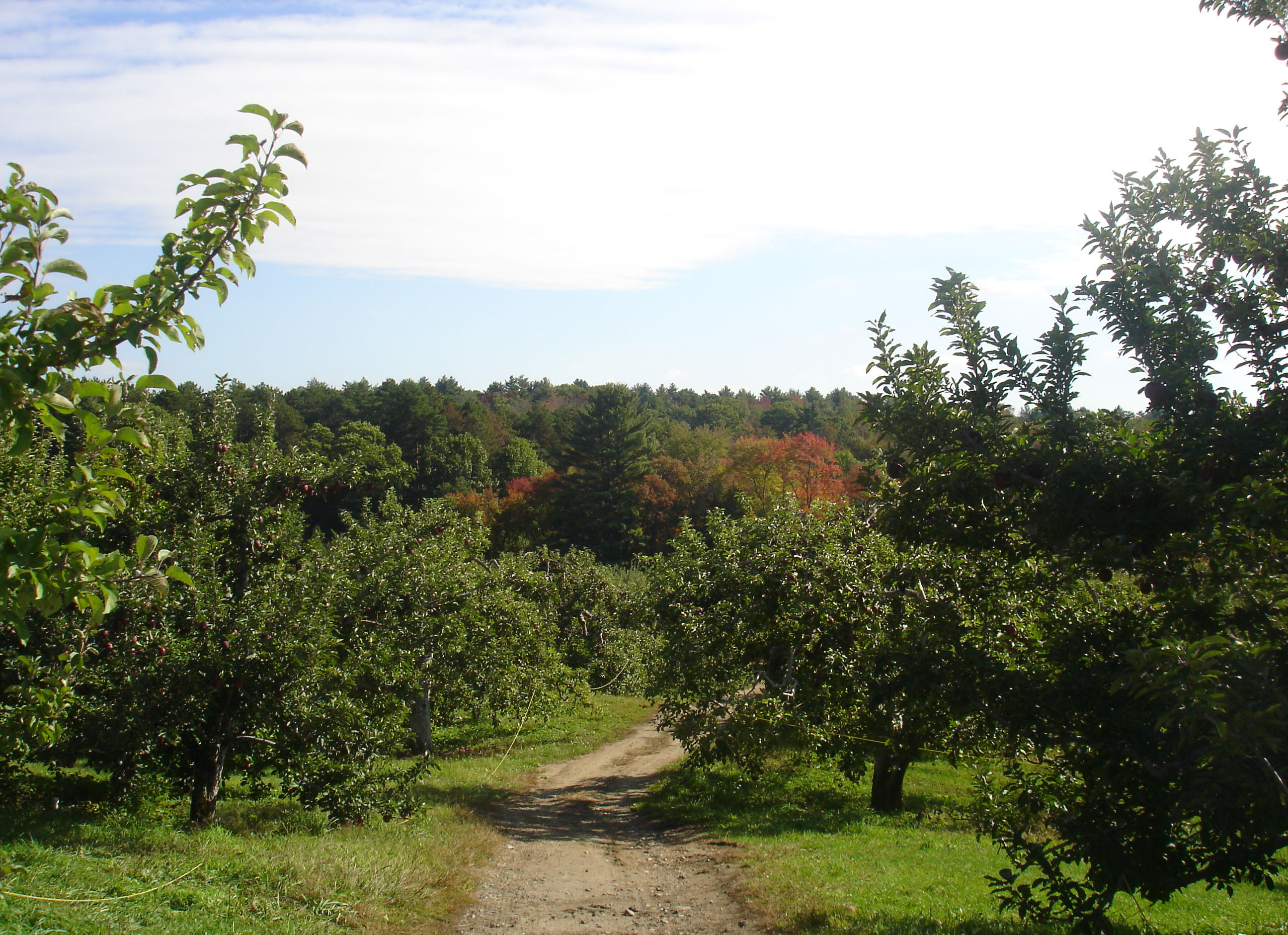 best places to go apple picking in boston