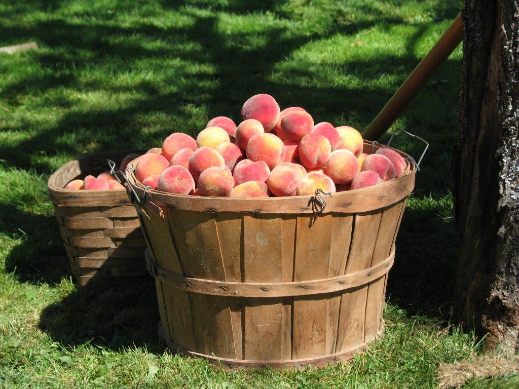 Peaches - The New England Real Estate Co.