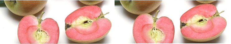 rose apple double