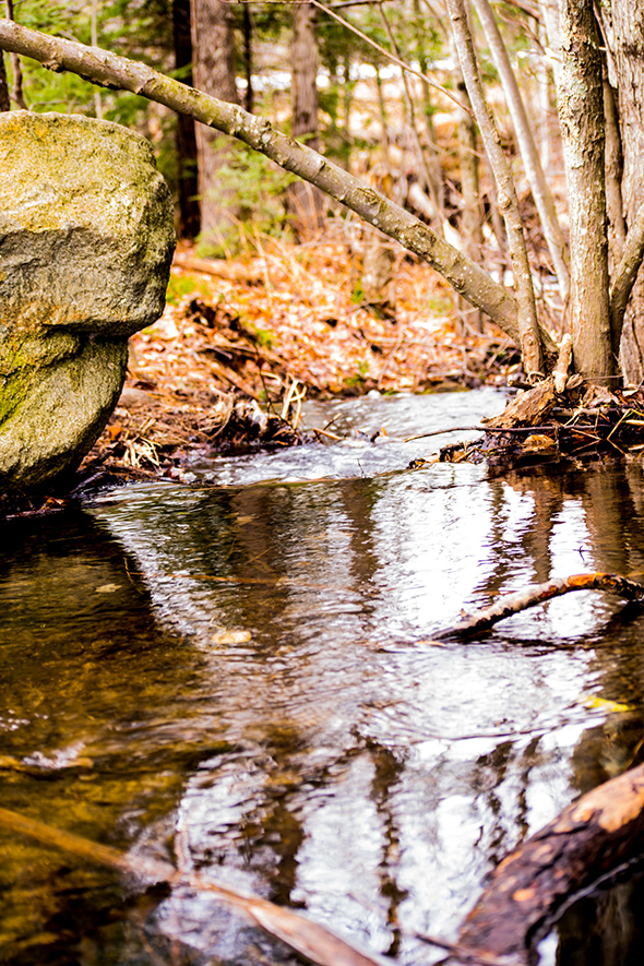 Danville New Hampshire stream in the woods