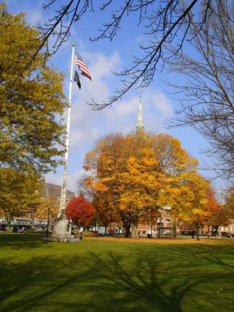 picture of a tree with yellow leaves and a flagpole next to it with a blue sky background in Natick, MA