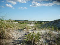 Dunes at Sandy Neck Beach, West Barnstable, Image via Wikipedia