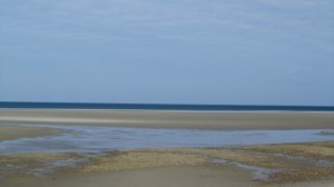 Chapin Low Tide