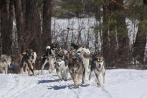 dog_sled-winter_web