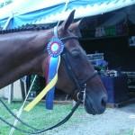 Vermont Summer festival Reserve Champion 2009