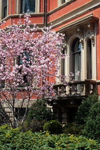 Back Bay apartment in the spring