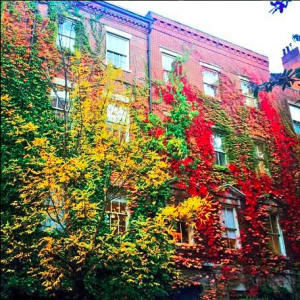 BOS-brownstone autumn