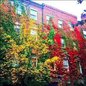 BOS-brownstone autumn